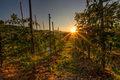 Sunset in a Tomato field-theodevil.jpg