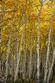 Fall Colors (8043388448).jpg