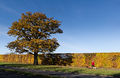 Autumn Oak - Broadhall Way - Stevenage.jpg